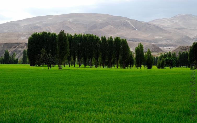Verde Puro
