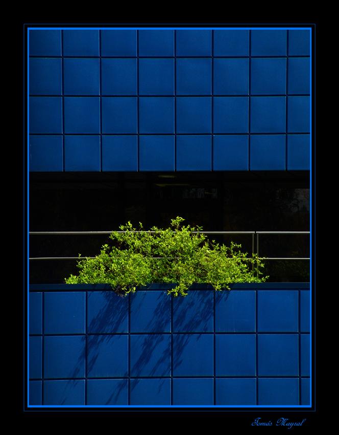 Verde sobre AZUL