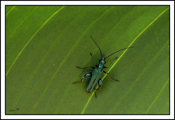 Verde su verde