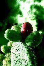 verde x k t quiero verde