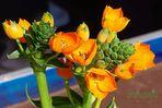 Verde/arancione