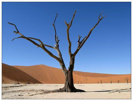 Verdorrter Baum im Death Vlei