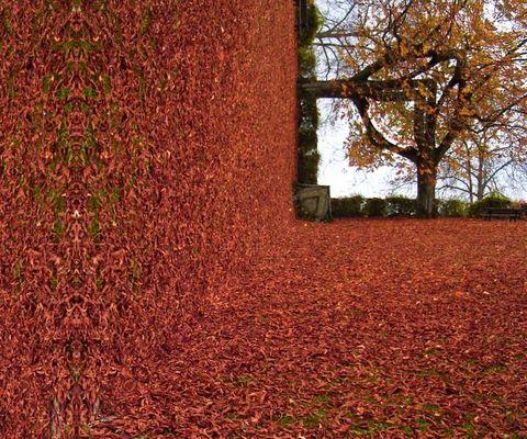 Verdrehter Herbst