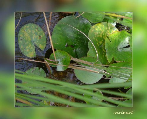 Verdure d'étang / Grünes im Teich