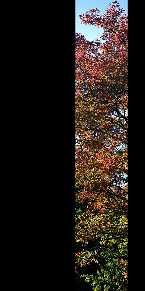 Vereinigung von Herbst und Felsenbirne