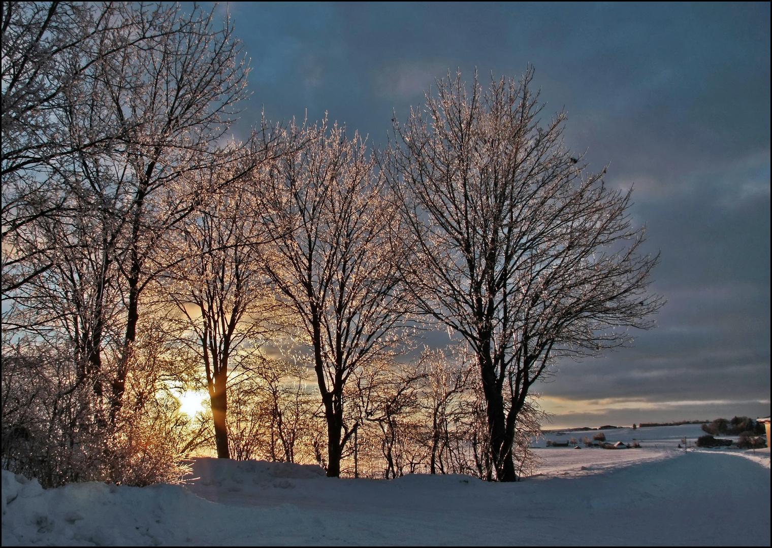 vereiste Bäume
