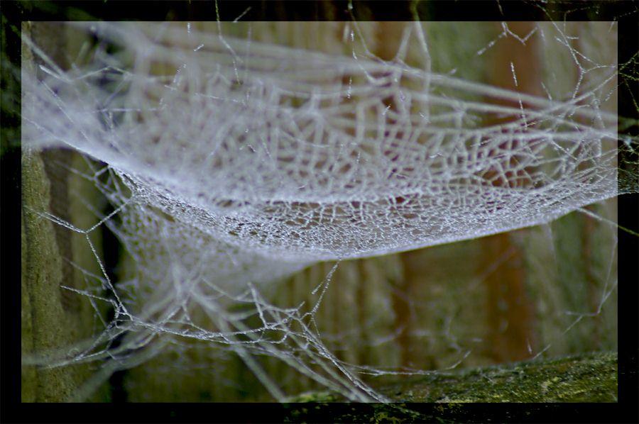 Vereistes Netz I