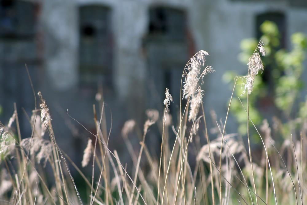 verfallener Bauernhof...