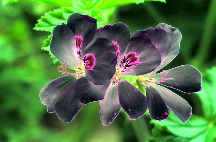 Verfremdung der Blume