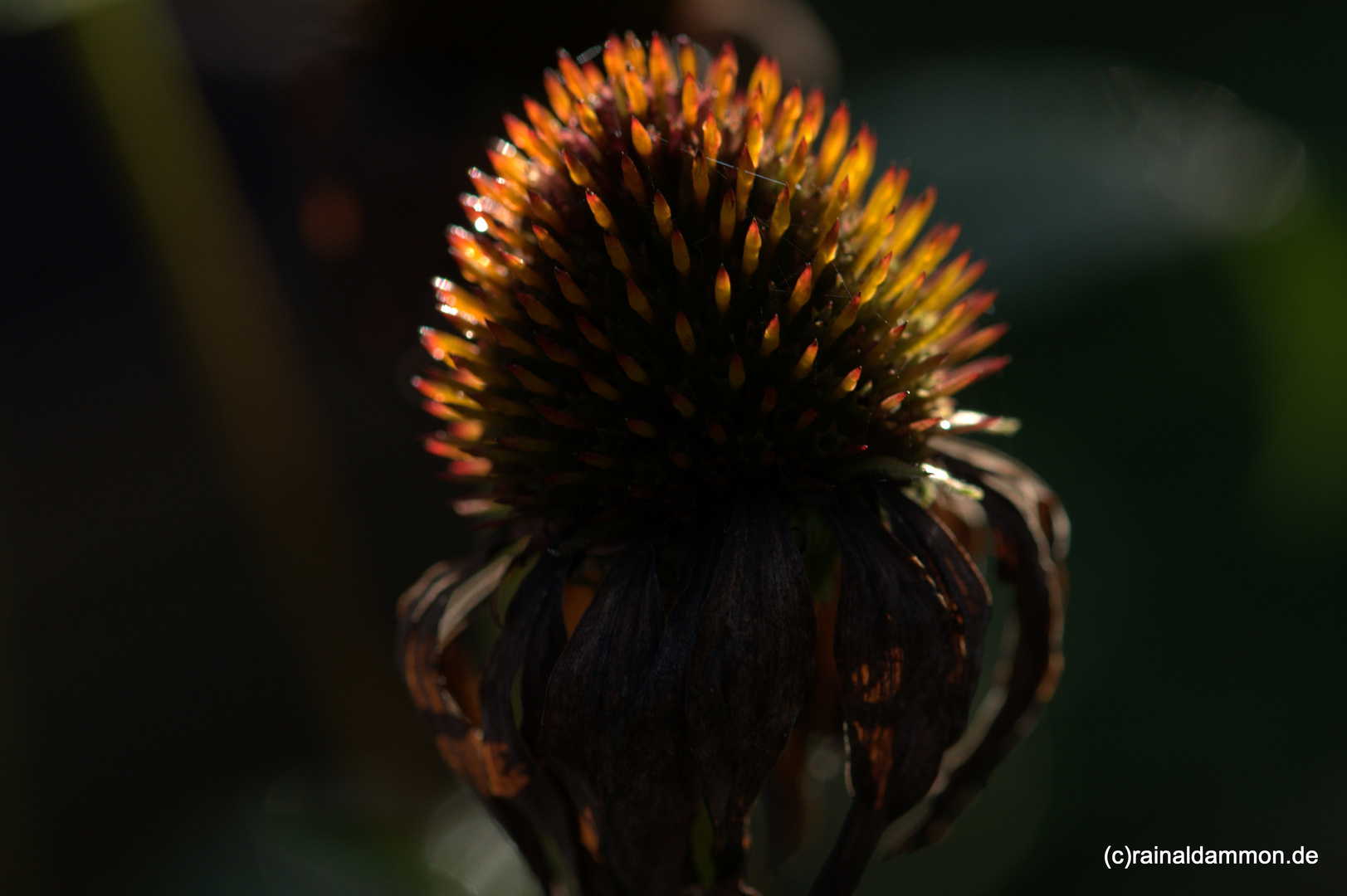 vergehende Schönheit im Herbstgarten