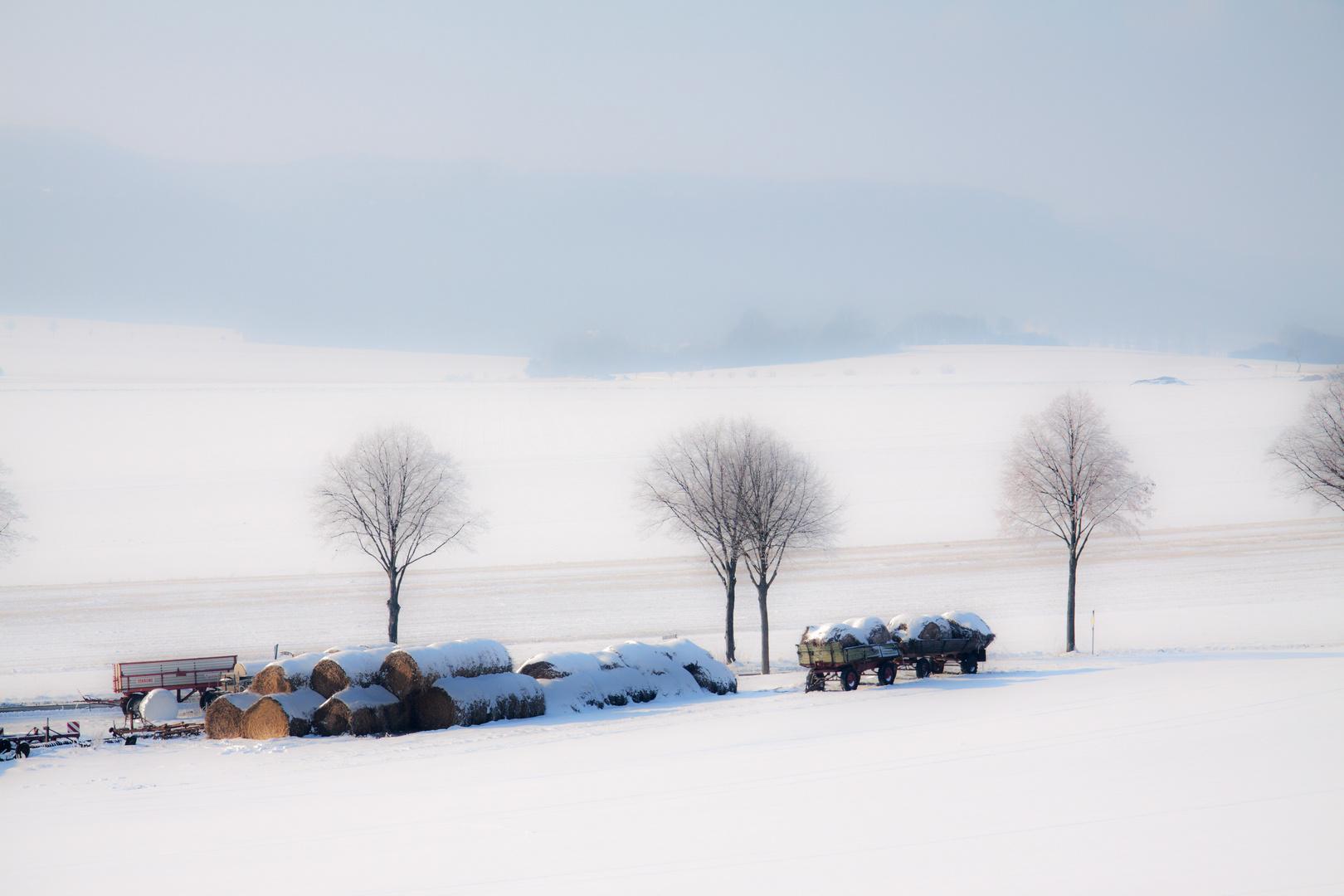 Vergessen im Schnee