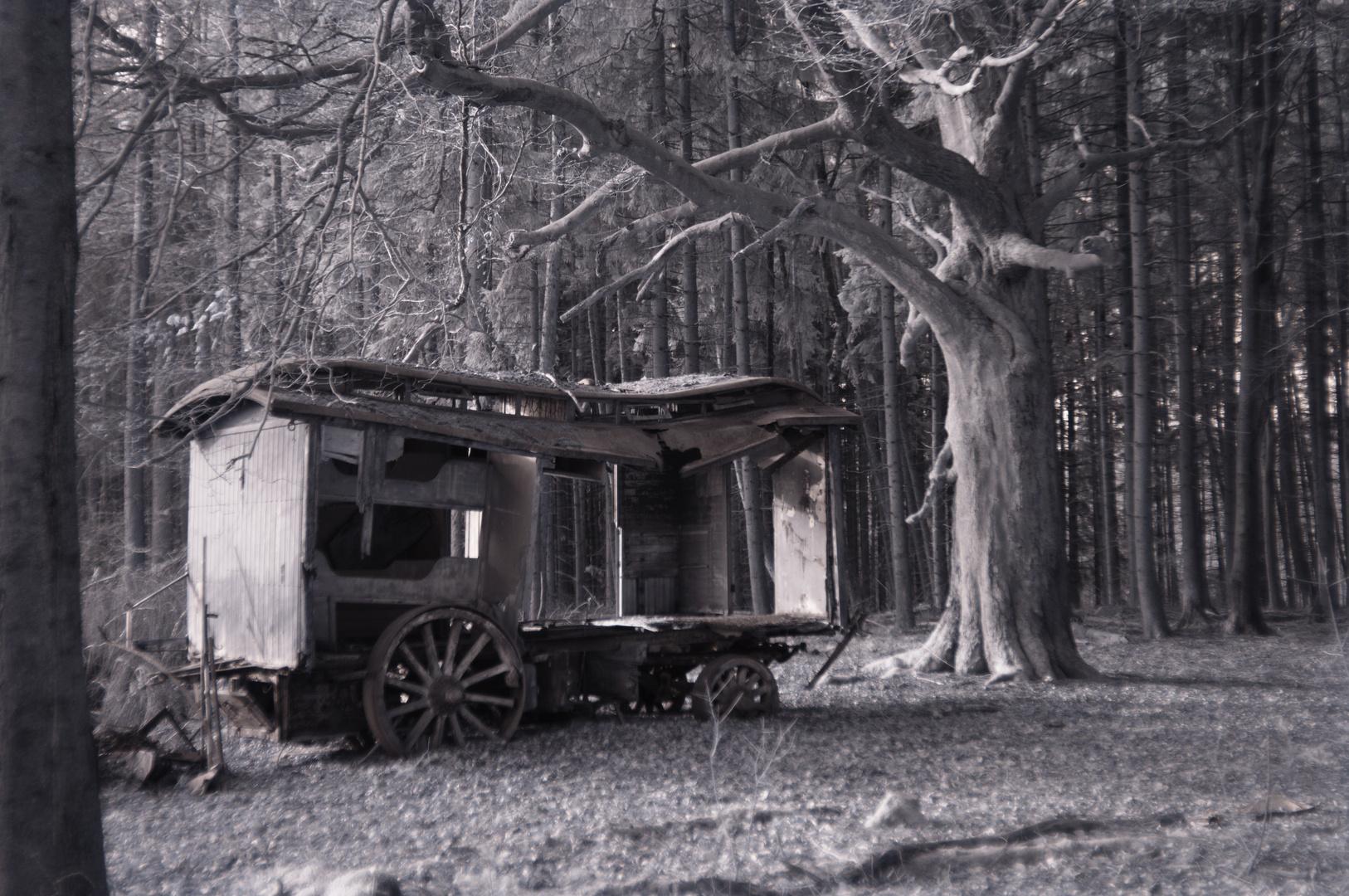 Vergessen im Wald