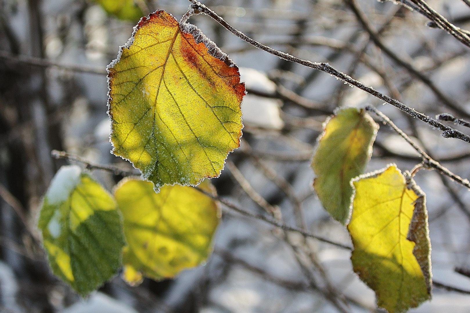 vergessene Blätter