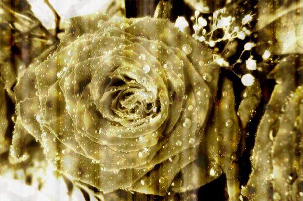 Vergessene Rose