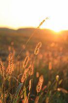vergoldete Natur