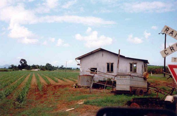 verkaufe traumhaus with sugar cane field