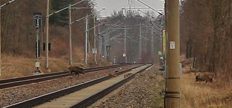 Verkehrserziehung am Schienenstrang...
