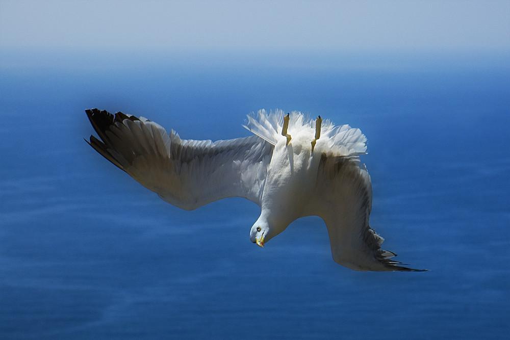 Verkehrte Vogelwelt