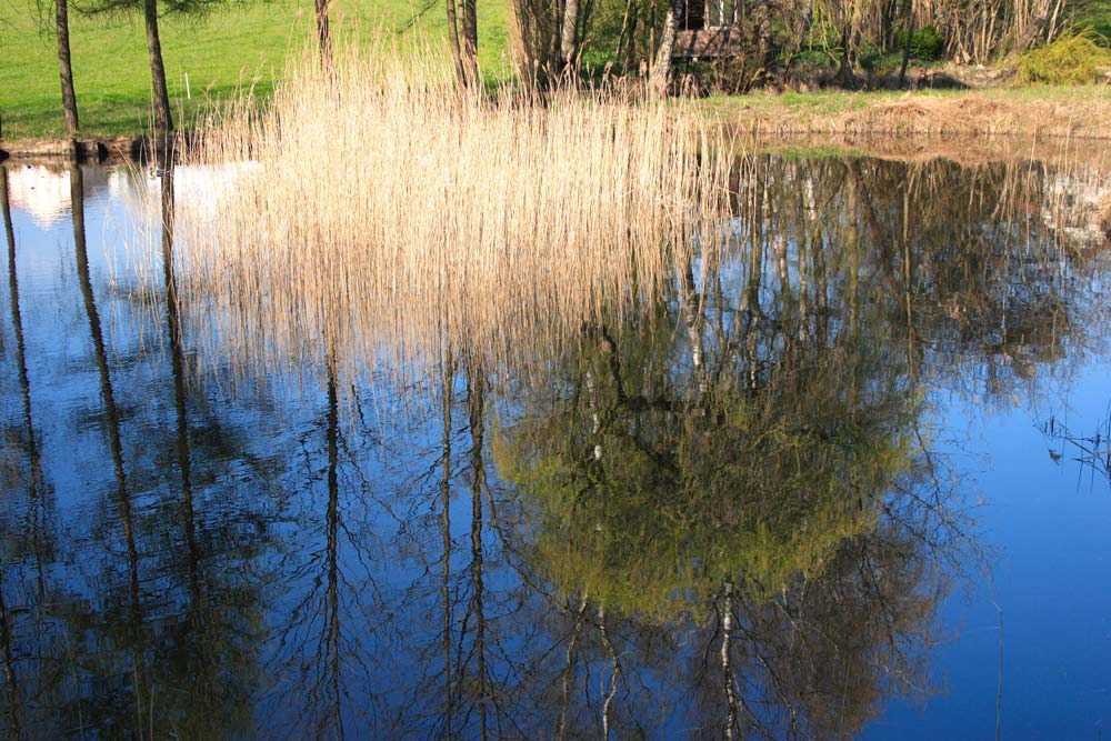 Verkehrte Welt im Teich