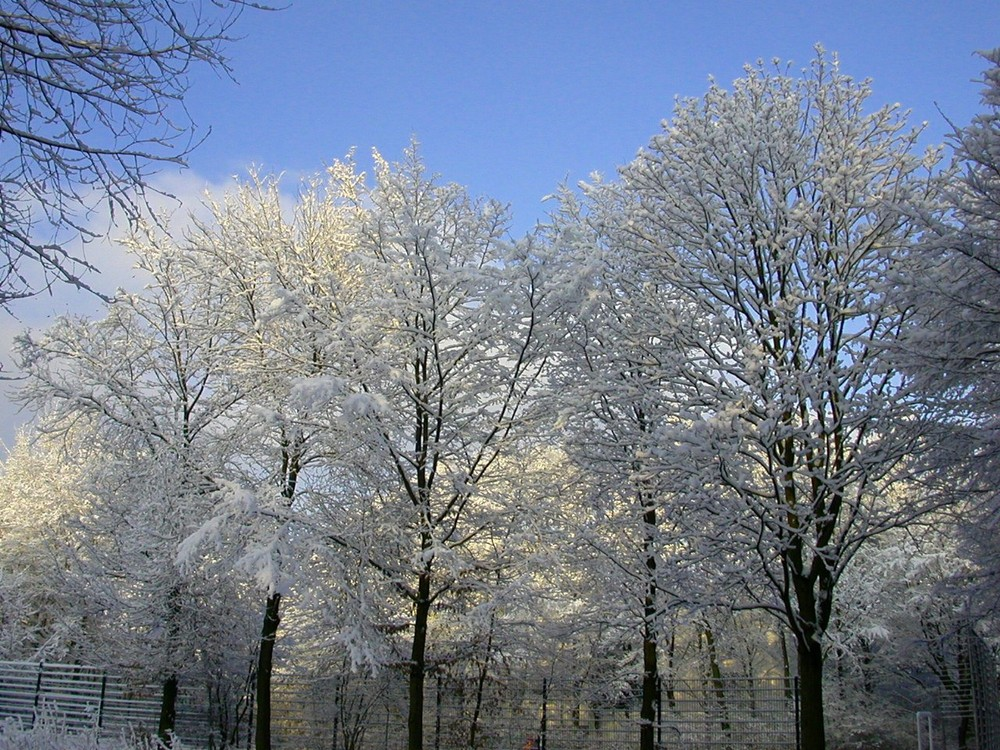 Verkleidete Bäume