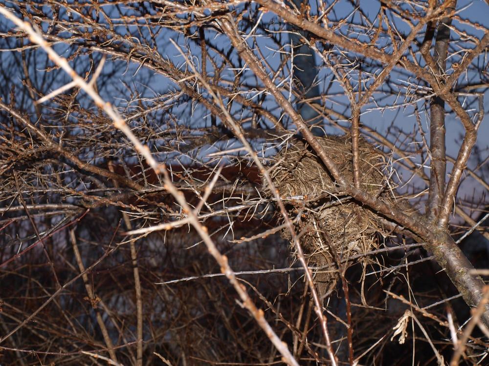Verlassenes Nest