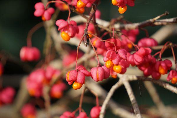 Verlockungen im Herbst