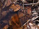 Vermoderte Blätter und Zweige in der Regentonne
