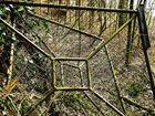 Verrottung im Wald . . .