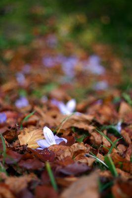 Verrückte Herbst