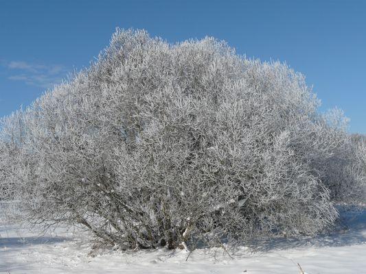 Vers la fin de l'hiver?