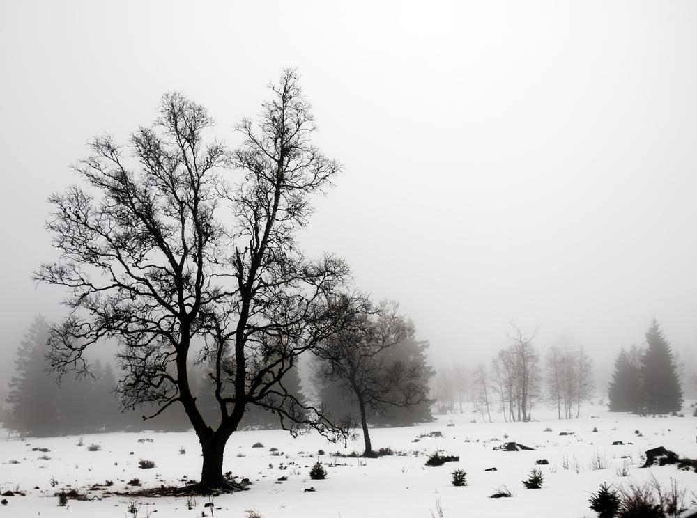 vers la fin de l'hiver - am Ende des Winters