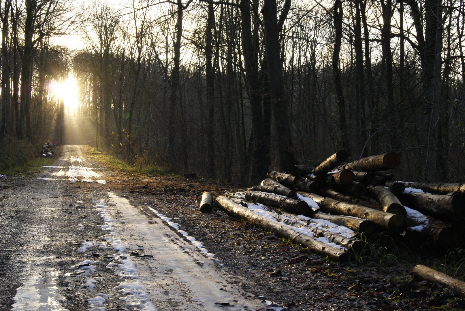Vers l'espoir!! forêt de clermont, oise
