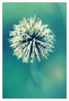 ...versäum keine blüte im frühling...