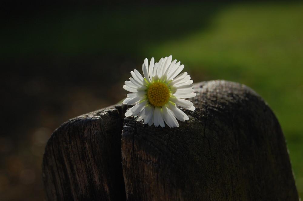 Versäume nicht das kleine Glück, um auf das Große zu warten!