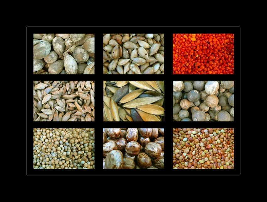 verschiedene Samen Amazoniens