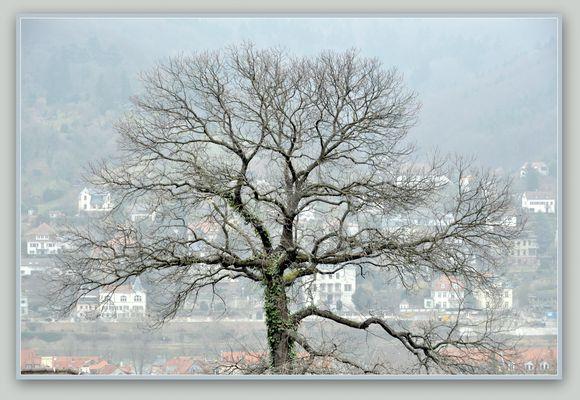 Verschleiert hinterm Baum