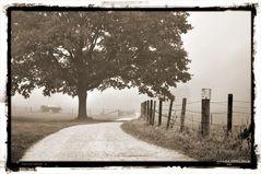 Verschleierter Weg