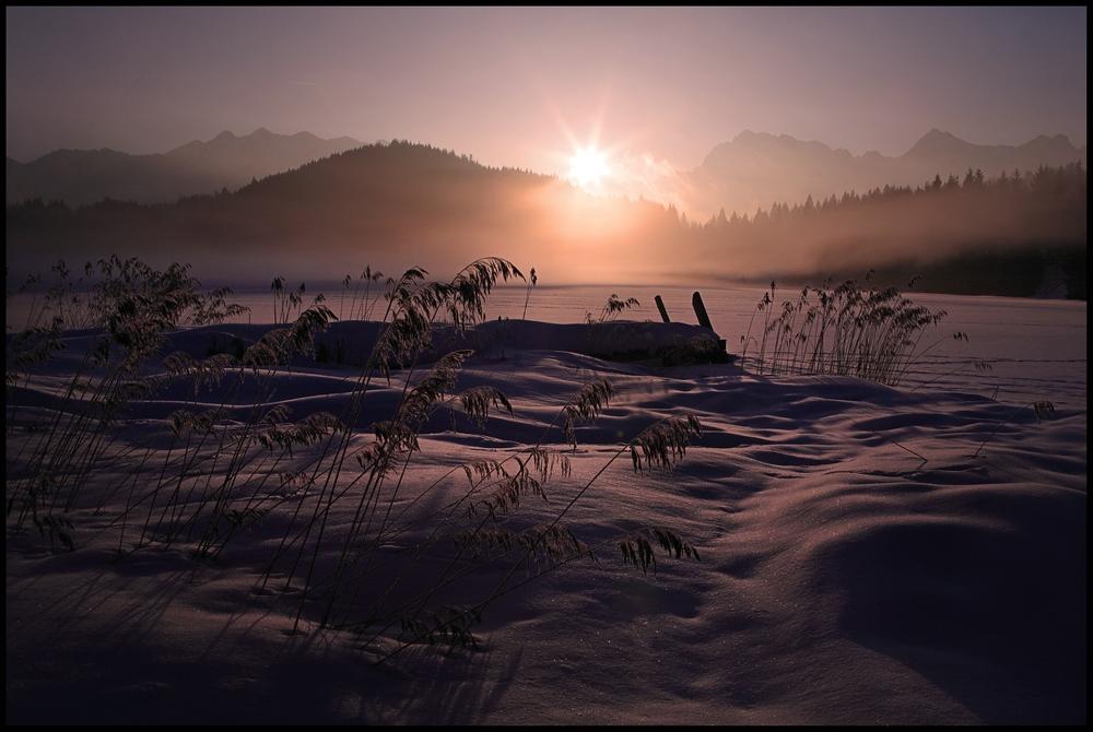 ~ Verschleierter Wintermorgen ~