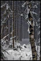 Verschneit Wald