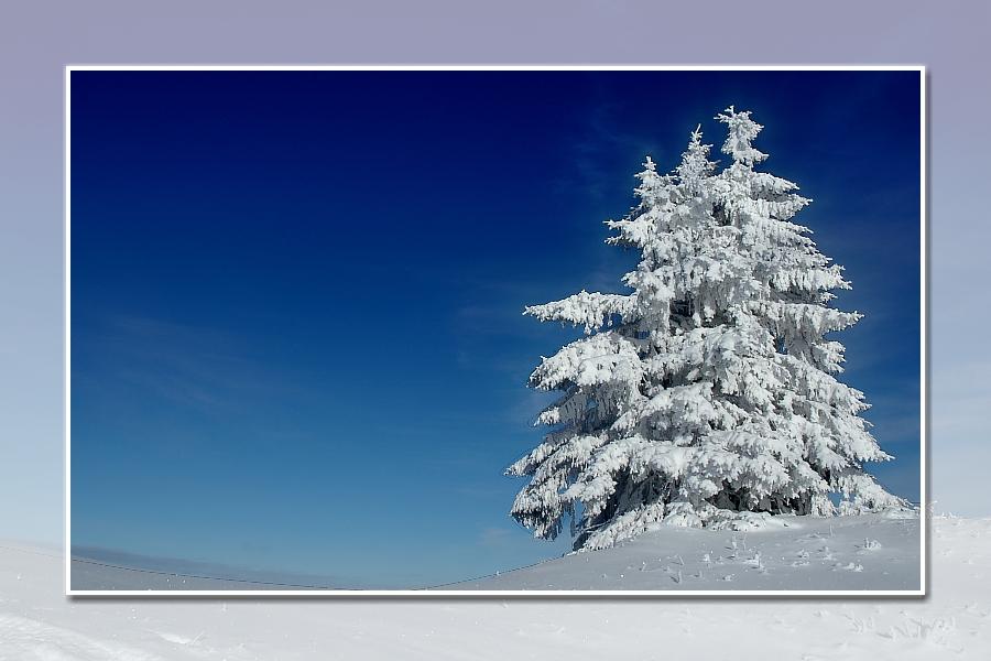 verschneite tannen rossstein alm foto bild jahreszeiten winter natur bilder auf fotocommunity. Black Bedroom Furniture Sets. Home Design Ideas