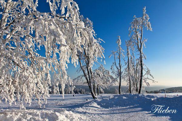 Verschneiter Baum auf dem Kahlen Asten