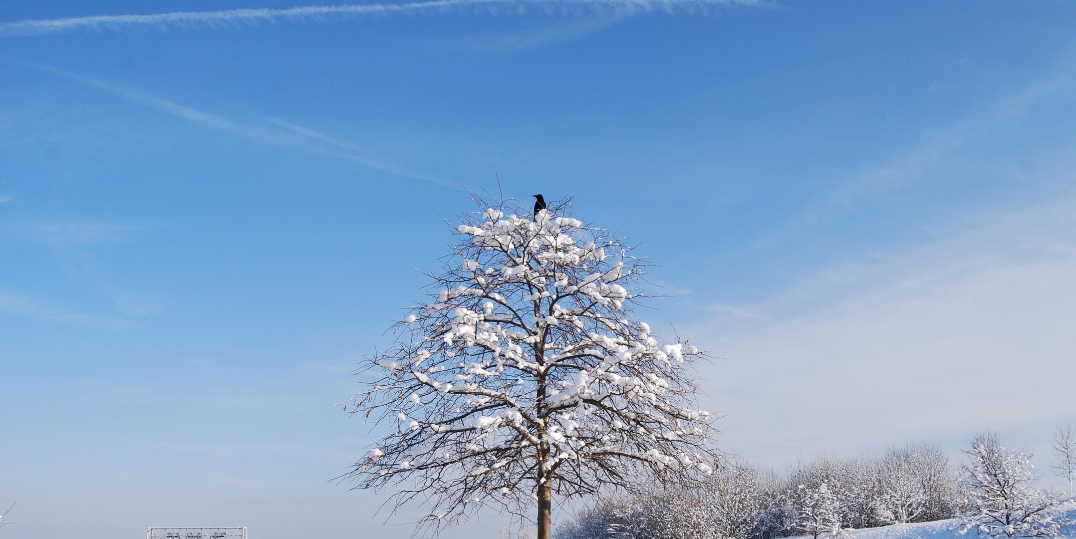 verschneiter baum mit vogel foto bild jahreszeiten winter natur bilder auf fotocommunity. Black Bedroom Furniture Sets. Home Design Ideas