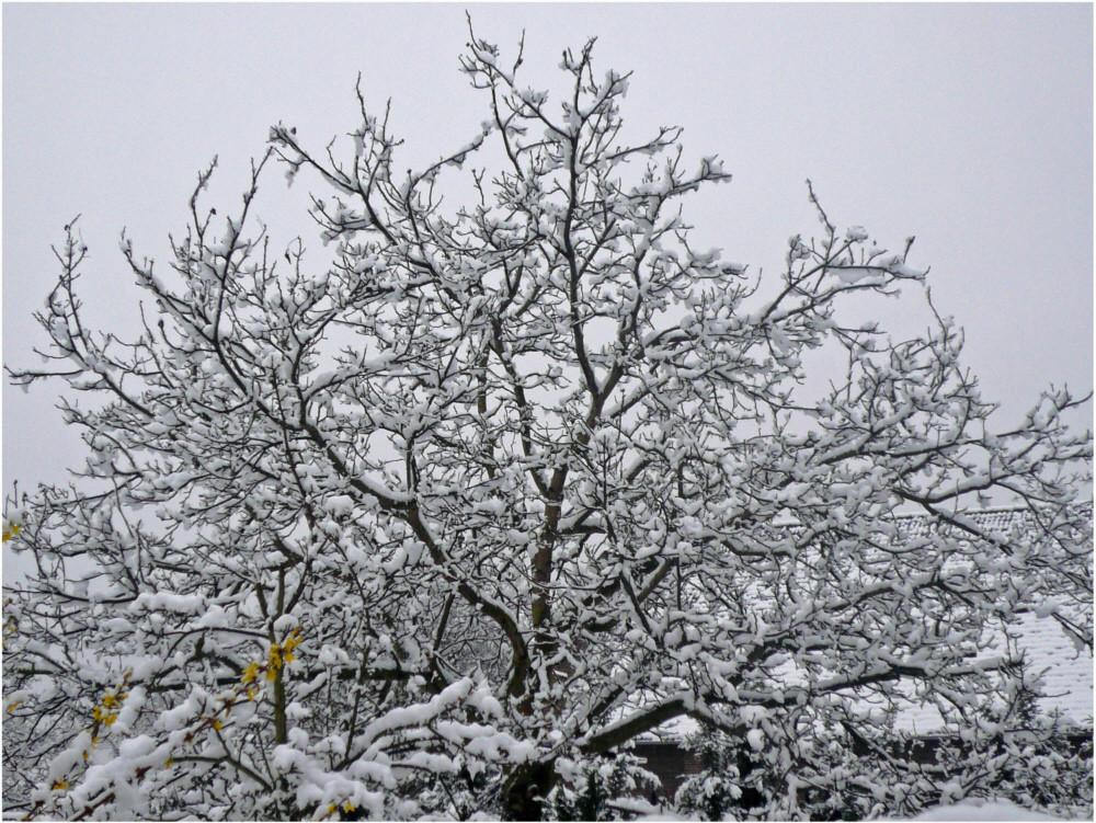 Verschneiter Frühling 1