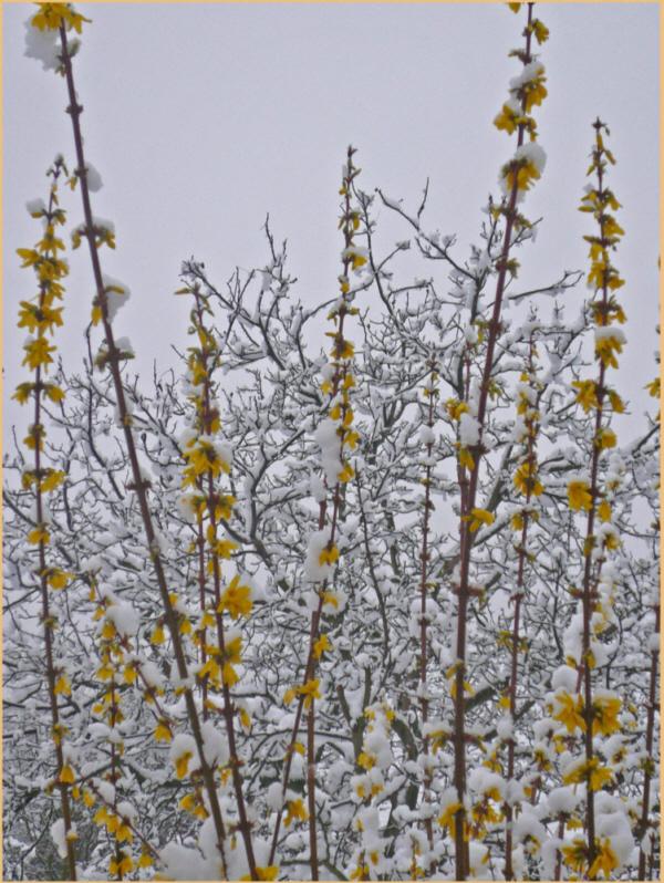 Verschneiter Frühling 2