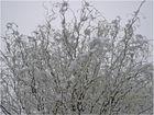Verschneiter Morgen am 04.03.2008