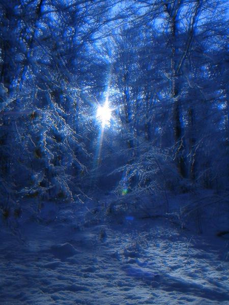 verschneiter Wald im Gegenlicht