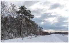 verschneites Moor