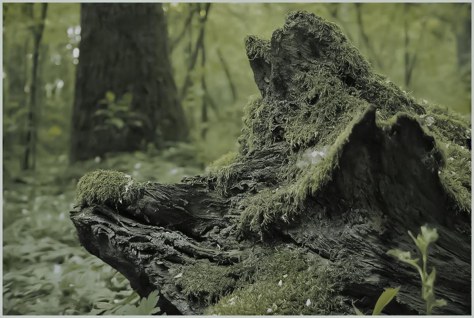 Verschweinertes Holz
