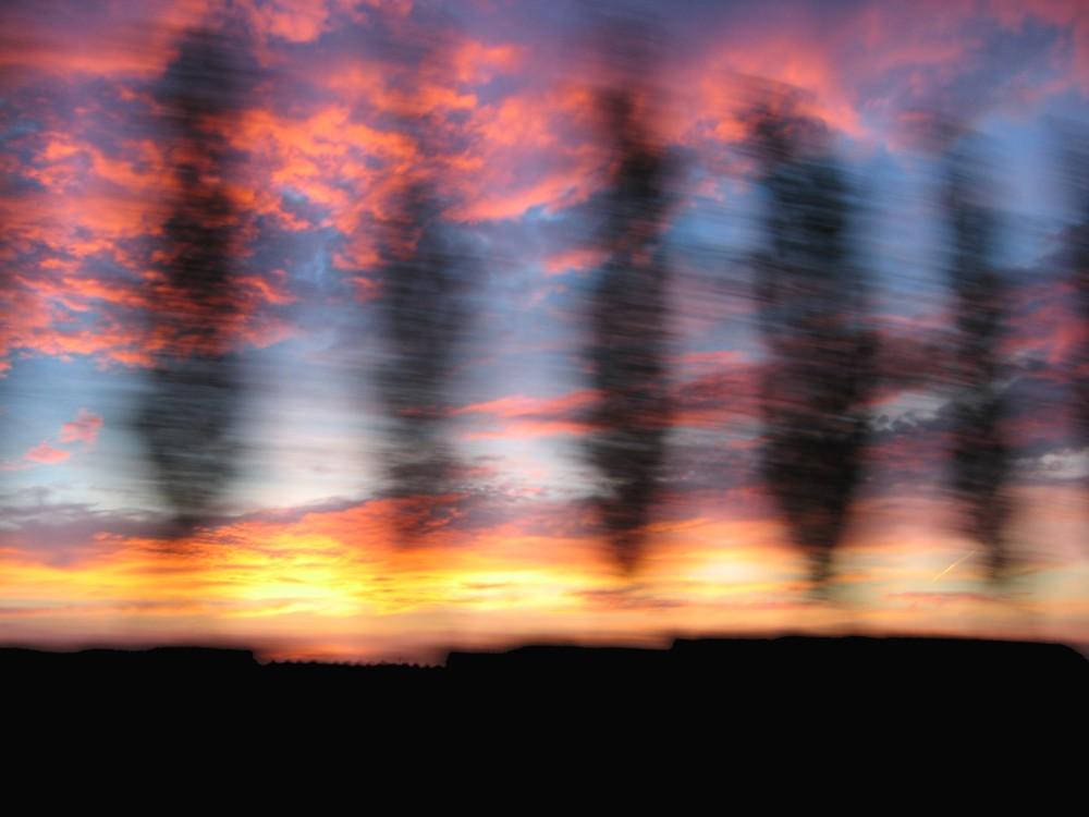 Verschwindende Bäume