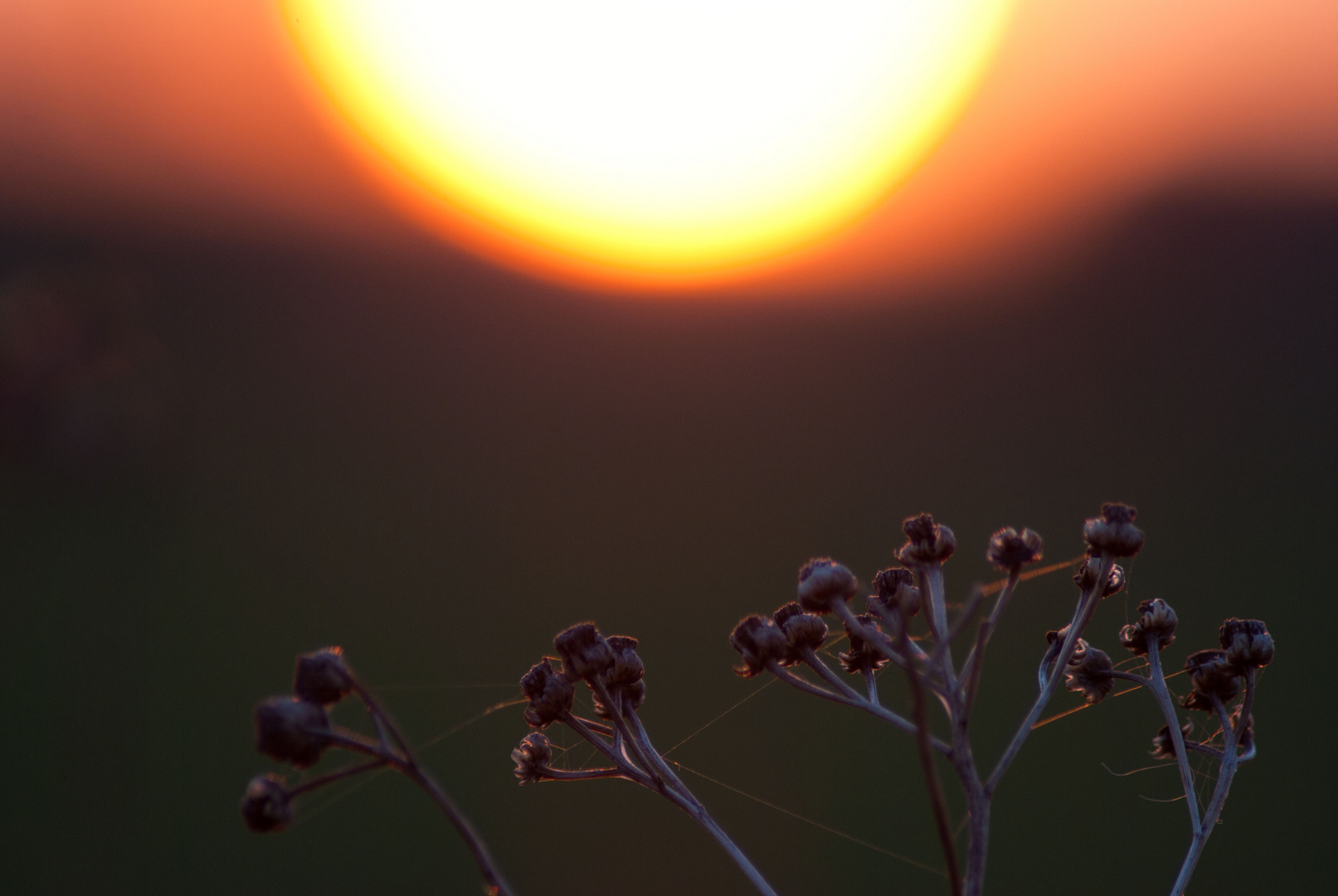 Verschwommener Sonnenuntergang